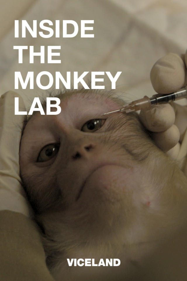 Inside the Monkey Lab